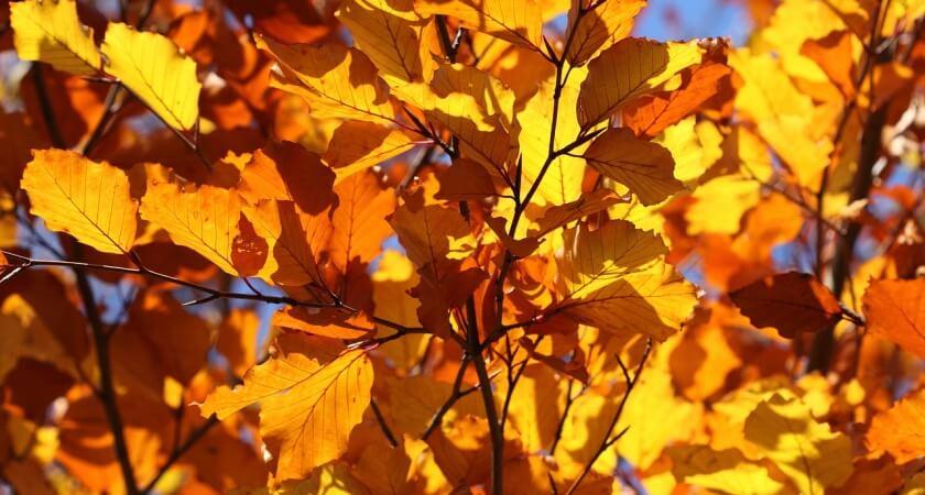 Skąd się biorą barwy jesiennych liści?