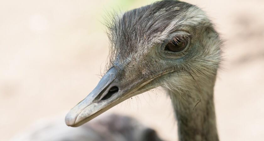 Ptak – tego nie zobaczysz na własne oczy!