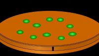 Elektro-bio-chemiczne korelacje